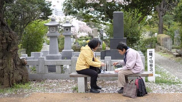 hanami im aoyama friedhof, roppongi tokyo