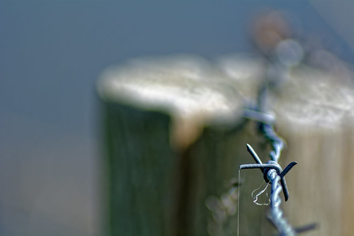 Thin Thread On Barbed Wire (see this big!)