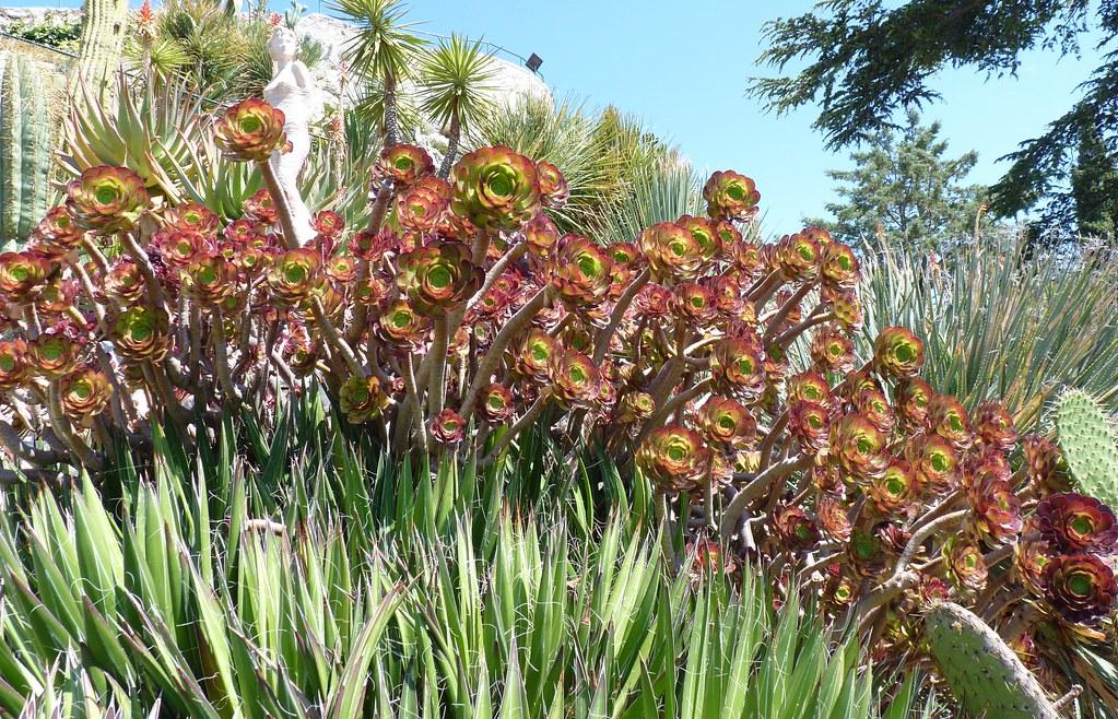 Jardin Exotique D Eze Alpes Maritimes Patricia Flickr