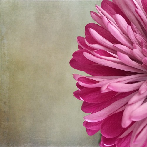 Flower Study | by Andrea Koerner