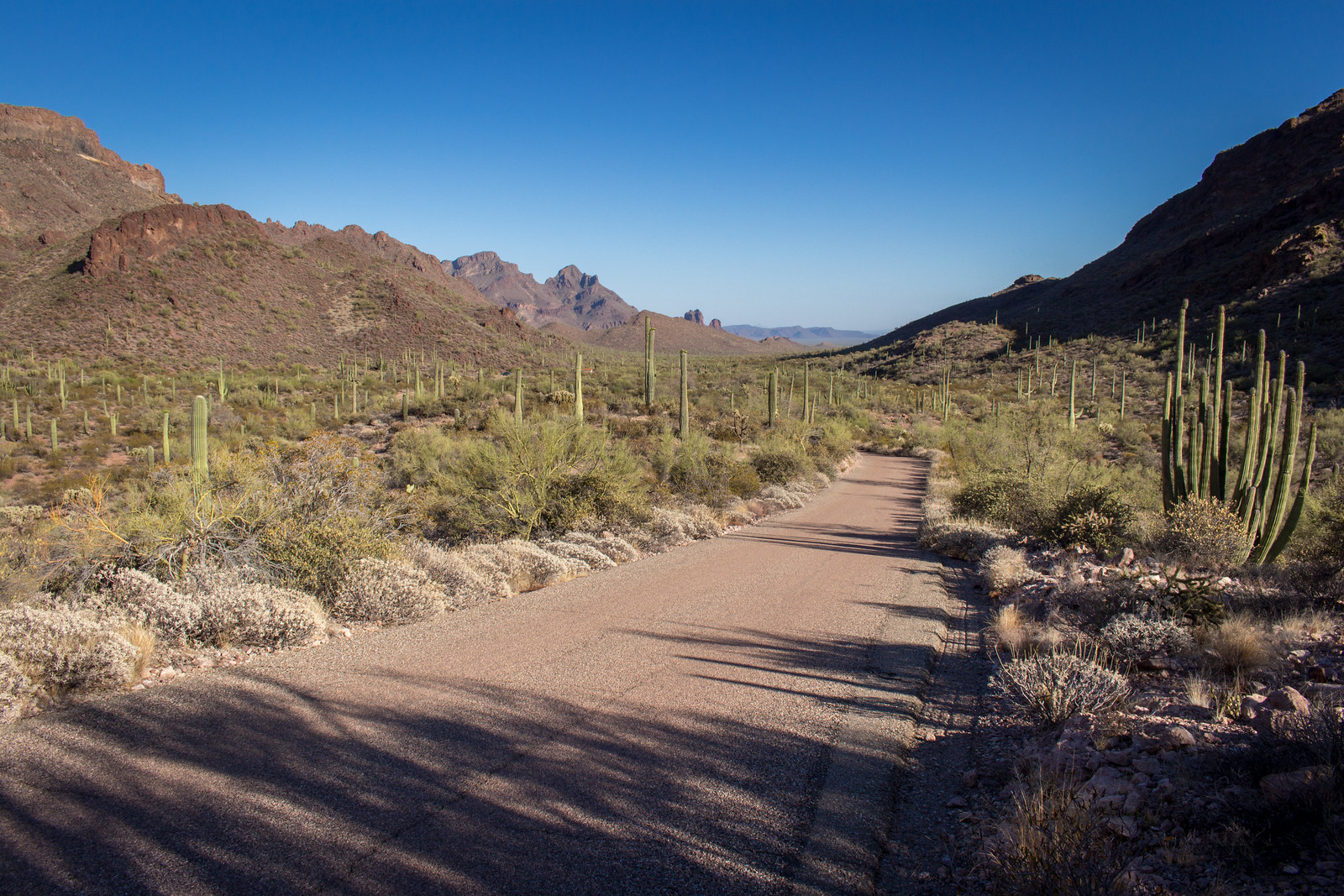 Long shadows on a dirt road leading down into the desert