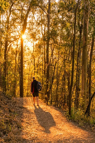 2016 australia brisbane mtcoottha mtcootthalookout qld queensland sonya7r clouds seqld sunrise shadows warm light bushwalking bushwalk trees eucalypts person man walking track trail path