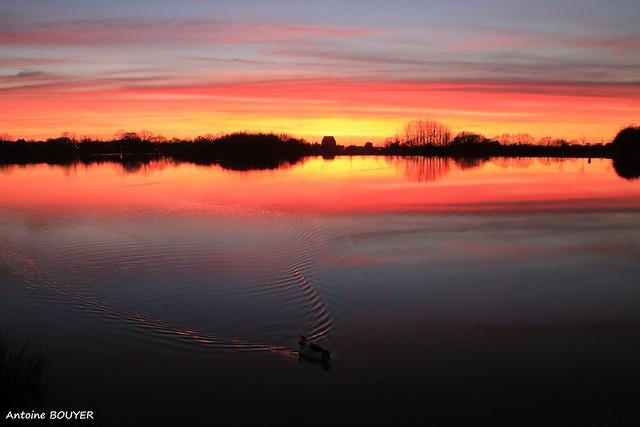 Canard et coucher de soleil sur le lac