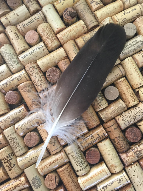 Young Bald Eagle's Feather