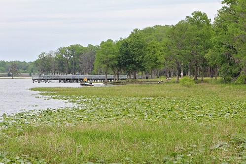 landscape lake aquaticvegetation inverness florida unitedstates