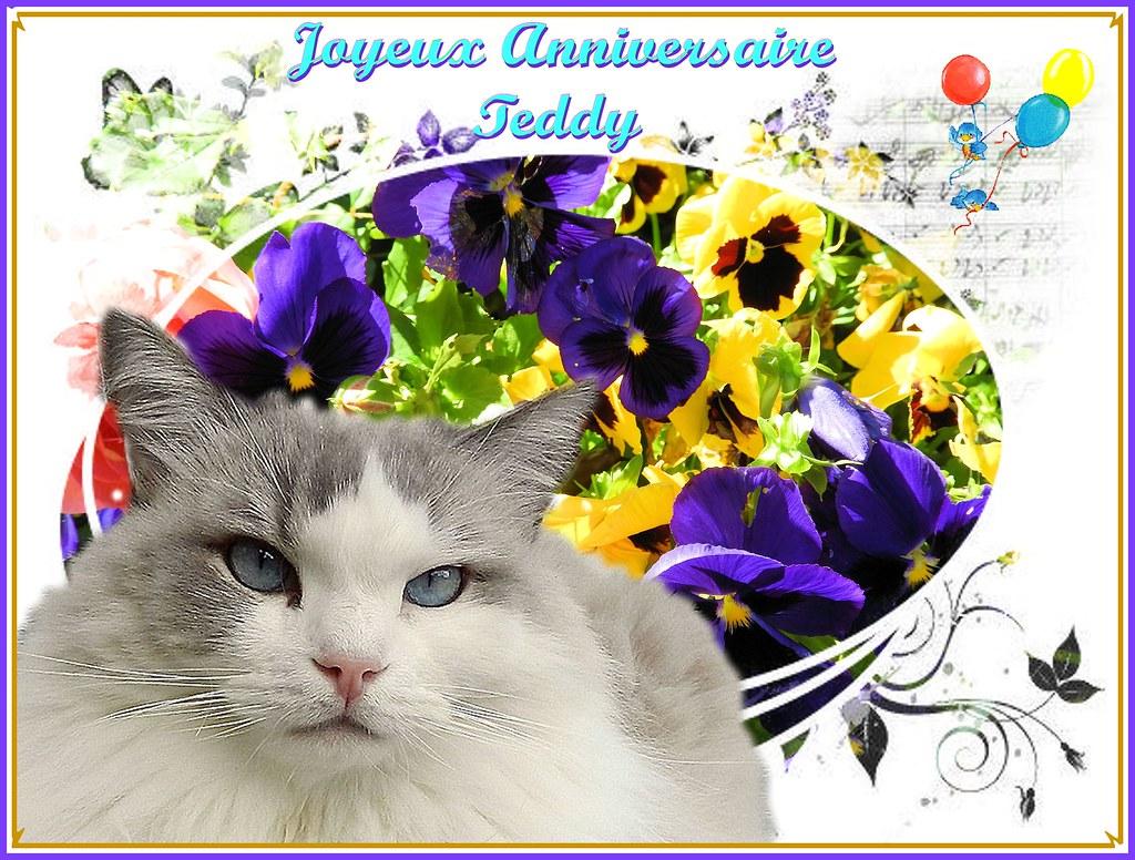 Joyeux Anniversaire Mon Amour De Teddylou Aujourdhui Mon