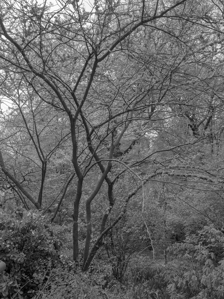 CentralParkTrees-3