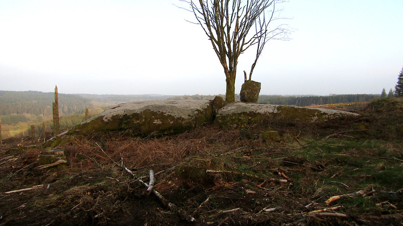Shillyrock (William Crossings' Druid's Altar) - fissure and tree
