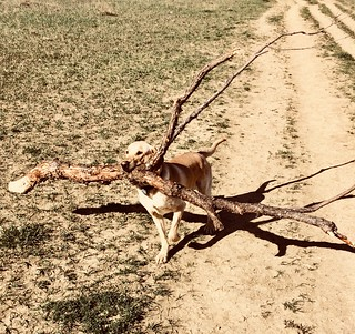 The Branch Manager | by Laertes