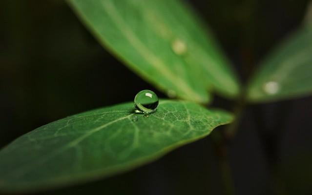 #dewdrops #macrophotography #macrooftheday #macro