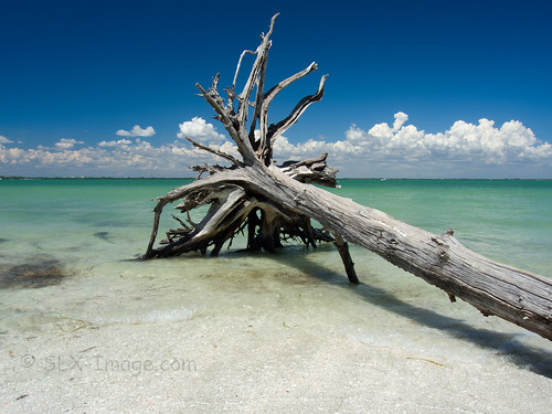 sea usa beach landscape paradise florida sanibelisland