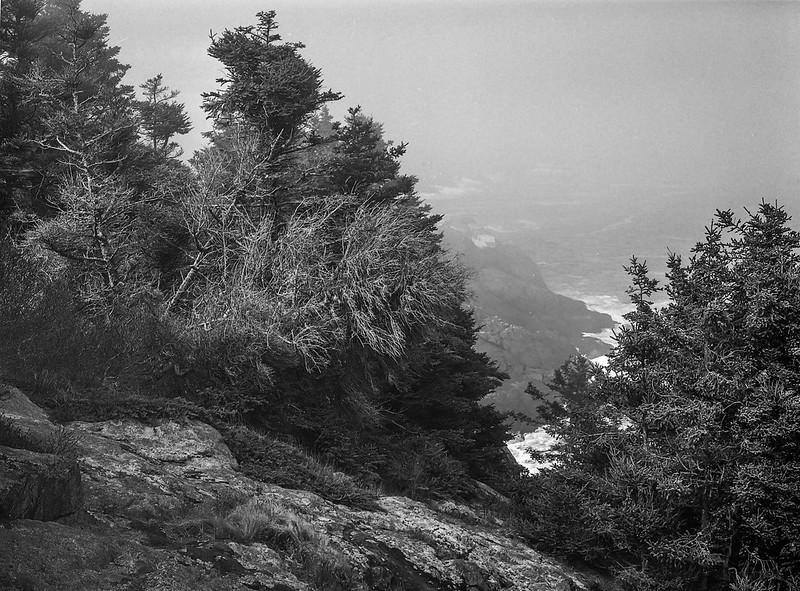 spruce, lichen, rock forms, near Little White Head, Monhegan, Maine, Mamiya 645 Pro, mamiya sekor 80mm f-2.8, 5.15.15