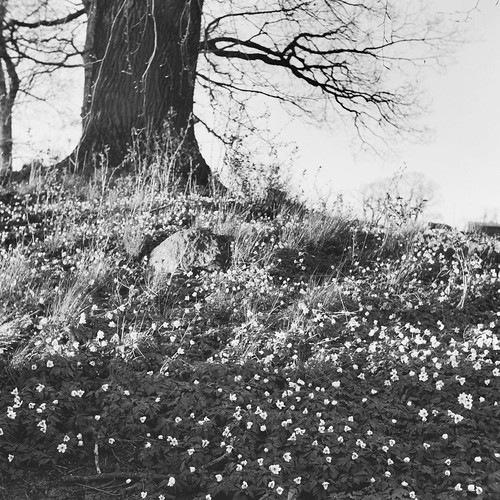 small flowers under a tree in black, white and grey | by Mister.Marken