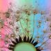 rainbow drops by Lorraine1234