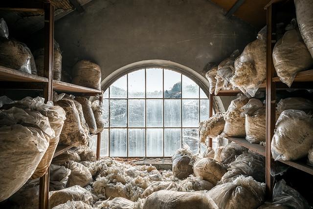 • Acarina attica
