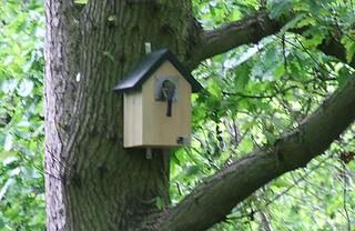 #mybirdbox