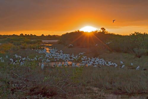bird water sunrise florida wildlife merrittisland
