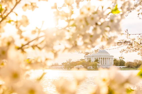morning sunrise washingtondc dc washington spring cherryblossom cherryblossoms jeffersonmemorial tidalbasin