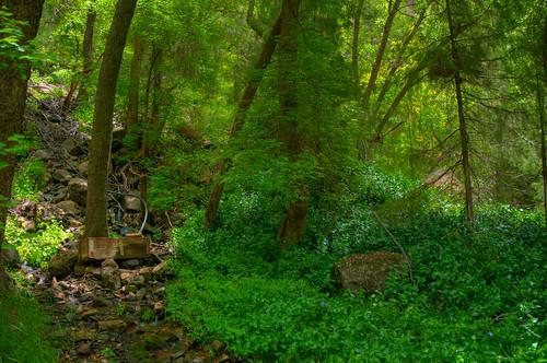 Little L.O. Trail No. 6 | by deborah.soltesz