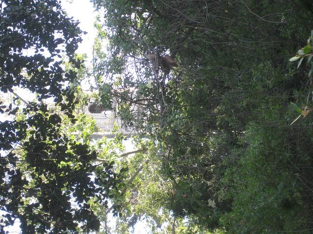 IMG_2711 st anthony from sbmnh thru trees