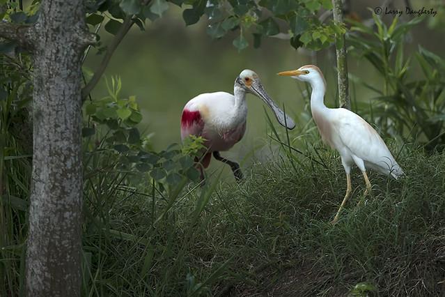 Two birds meet..... :-)......D800