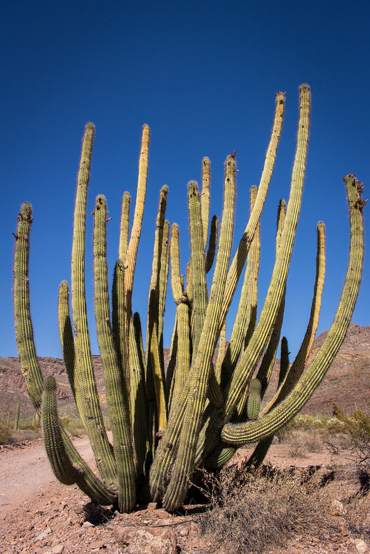 Organ Pipe Cactus National Monument, May 29th, 2016