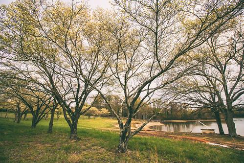 trees lake beautiful landscape spring northcarolina ymca dogwoods gastonia robinwoodlake dorameulman