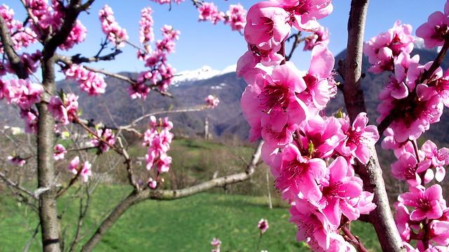 San Gottardo in primavera