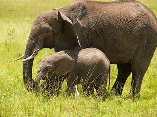 Mum and her Baby !