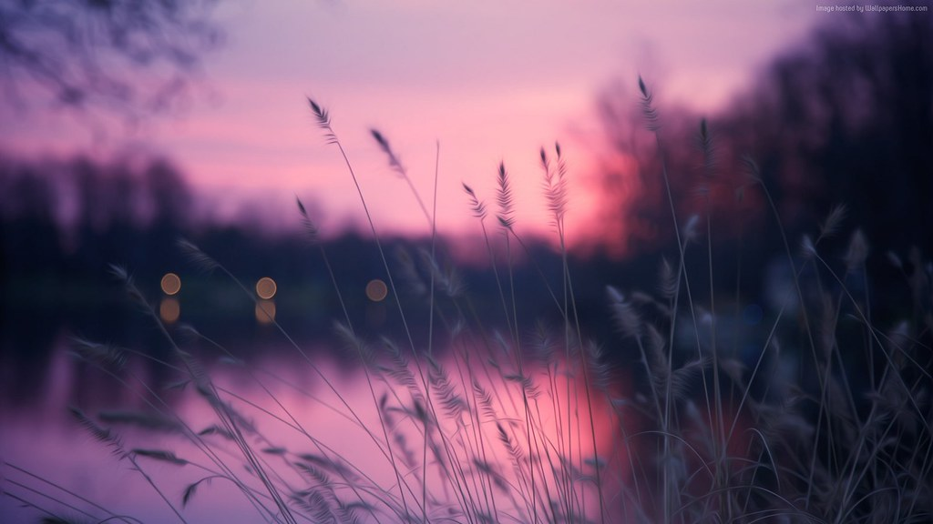 Lake 1920x1080 4k Hd Wallpaper Grass Sunset Purple 5173 Flickr