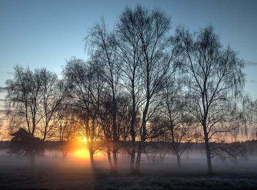 frost mist suffolk sunrise trees