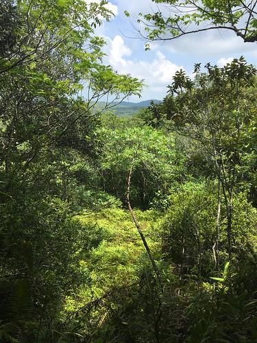 Thu, 08/25/2016 - 11:13 - Ngardok Nature Reserve, Palau