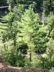 Hartford, VT, Quechee Gorge [09.08.2008]