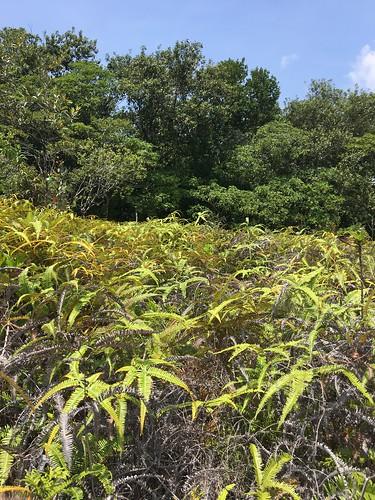 Thu, 08/25/2016 - 11:27 - Ngardok Nature Reserve, Palau