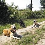 2008-07-03_11-52-29 - Dog Family