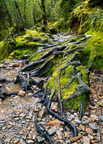 Walk to Devils Punchbowl Waterfall - South Island, New Zealand | by neeravbhatt
