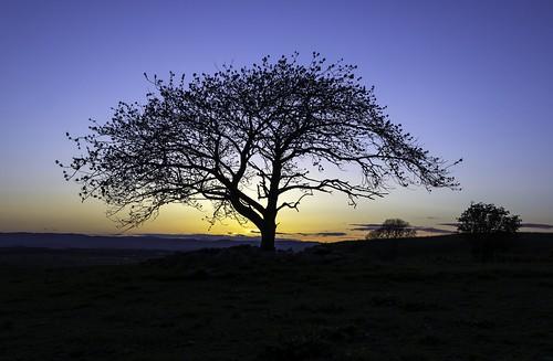 sunset sky tree scotland sony perthshire alpha