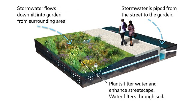 illustration of a rain garden next to a sidewalk. The rain garden is a slightly sunken area planted with lots of greenery and flowers native to the region. Pipes bring water from the storm drains in the street, and storm water flows downhill on the surface into the rain garden. Plants filter water and enhance the streetscape, and the water then filters through the soil below.