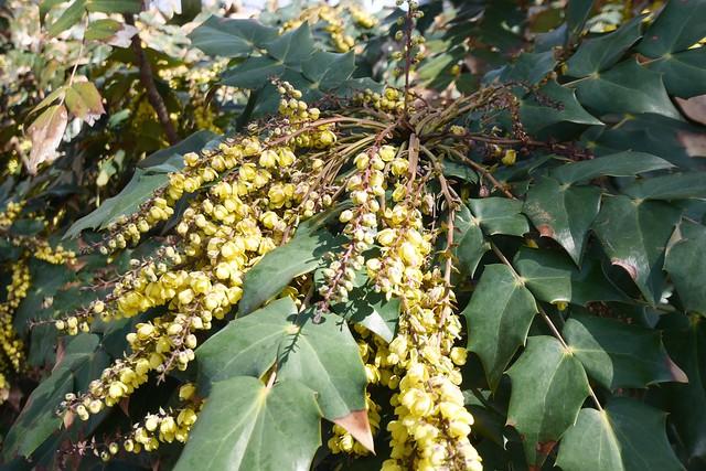 木, 2015-04-16 14:36 - Brooklyn Botanic Garden 濃厚な香りを漂わせている