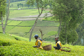 Kitabi Tea Processing Facility | by World Bank Photo Collection