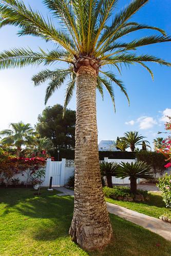 Palm Tree | by Christine H.G.