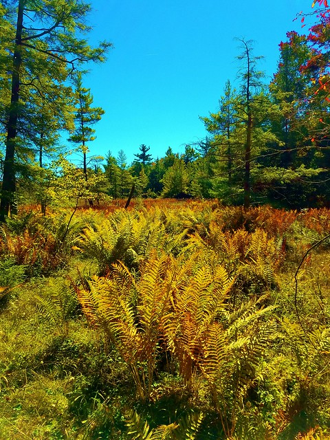 Meadows with ferns on fire