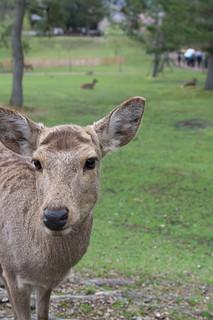 deer   by hiro_take