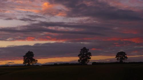 caswellfarm northamtonshire greensnorton towcester trees tree dusk sunset sky vibrantsky landscape landscapes outdoor silverstone panasoniclx5 lx5