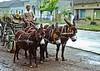Echtes Eselgespann vor einem schwäbischen Pferdewagen – eine einmalige Kombination eines Holzfällers aus dem Banater Bergland, der mit seiner Ware im Dorf hausiert. Einen echten schwäbischen Pferdewagen gibt es zur Zeit noch in der Heimatausstellung.