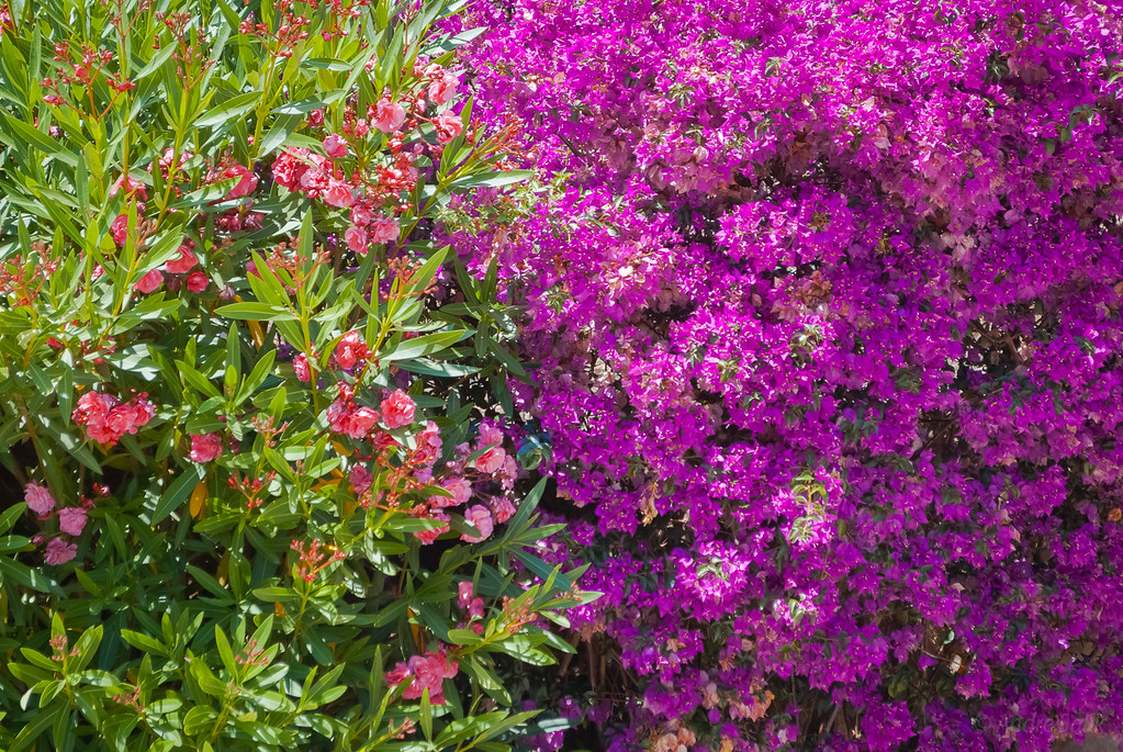 a beautiful flower, pretty color ! 16:38:23  DSC_4576