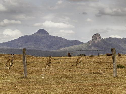 sky mountains clouds landscape cattle roos peaks kangaroos paddock ruralscene peakcrossing