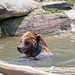 Flickr photo 'Bronx Zoo_2015 05 24_0150' by: HBarrison.