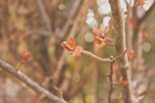 Bit of Bokeh | by tdotcom
