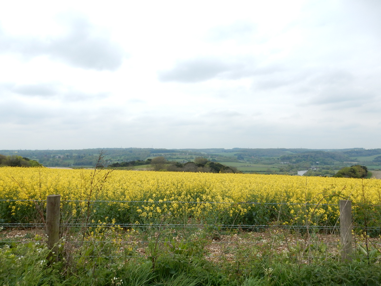 rapefield Going Circular via Hill Bottom